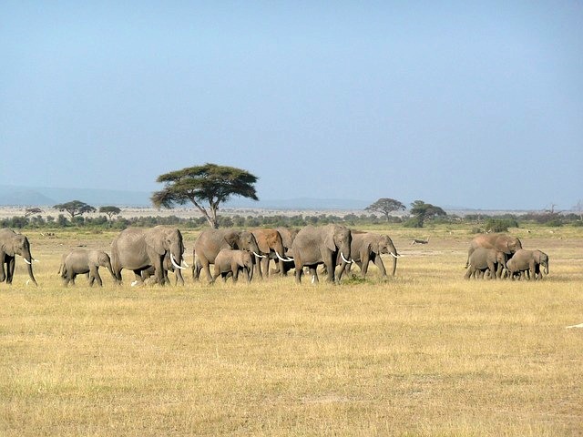 viatge-safari